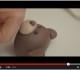 Video Tutorial. Orsetto in pasta di zucchero